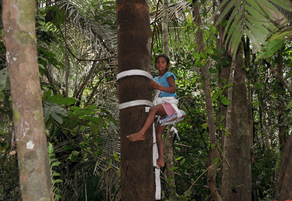 Children are also learning to climb the palms!